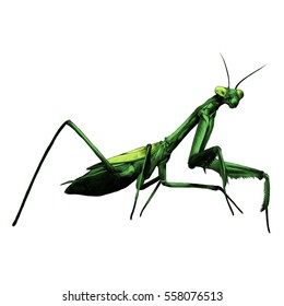 praying mantis insect vector color drawing