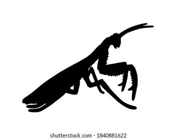 Praying mantis vector silhouette illustration isolated on white background. Exotic insect symbol.