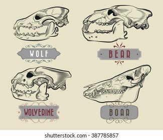 Predatory Animals Skulls Engraving Set