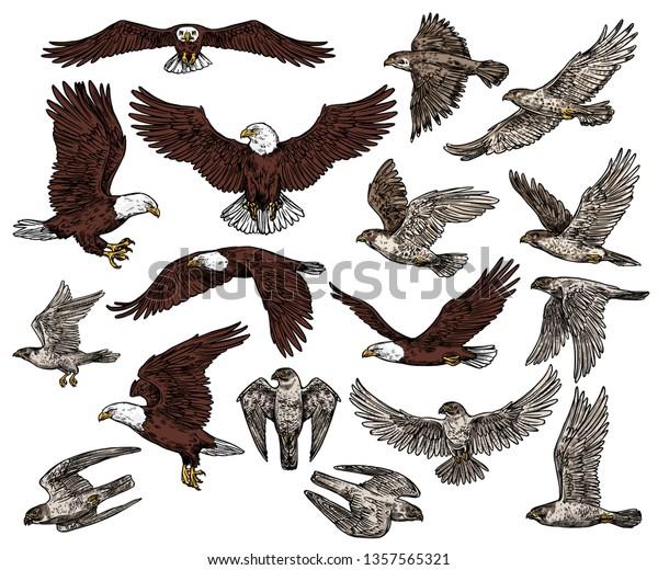Predatory Birds Prey Vector Sketch Icons Stock Vector Royalty Free 1357565321