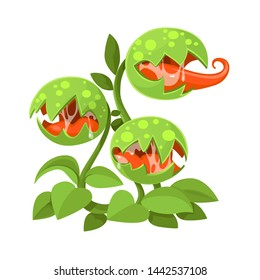 Predatory plant giant Venus flytrap with three traps mouths isolated on a white background