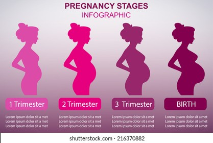 Pregnancy Stages Images, Stock Photos & Vectors | Shutterstock