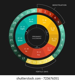 Pregnancy calendar. Menstrual and pregnancy cycle graphic. Average menstrual cycle days. Bleeding period ) and ovulation