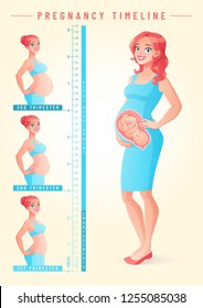 Pregnant woman with fetus. Growing belly by trimesters. Pregnancy timeline by weeks and months. Vector illustration isolated on white background EPS10.