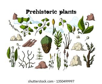 Prehistoric vector plants with stones. Different extinct greenery, Cartoon botanical rainforest set.