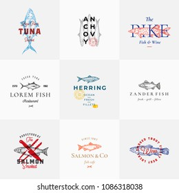 Premium Quality Retro Fish Vector Signs or Logo Templates Set. Hand Drawn Vintage Fish Sketches with Classy Typography, Tuna, Trout, Salmon, Herring etc. Great Restaurant and Seafood Emblems. Isolated