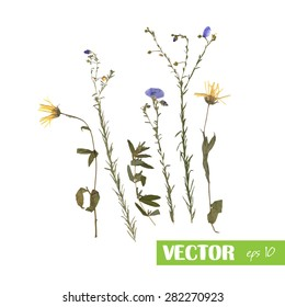 Pressed wild flowers isolated on white background, eps 10. Medicinal herbs
