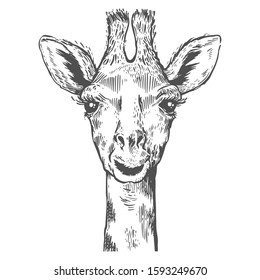 A pretty giraffe. Hand drawn giraffe for poster. Sketch of the giraffe facial head. Zoo animal for poster and paper