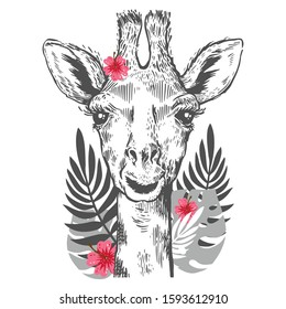 A pretty giraffe. Hand drawn giraffe for poster with tropical leves. Sketch of the giraffe facial head. Zoo animal with palm leaf and monstera, hibiscus