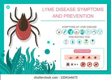 Preventing tick bite and lyme disease symptoms. Vector cartoon medical infographic.