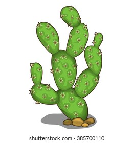 The prickly pear cactus. Vector illustration.