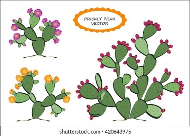 Prickly Pear vector. Prickly pear cactus with fruits, and flowers. Pink and yellow variants of blossoming. Prickly pear in blossom and with fruits.