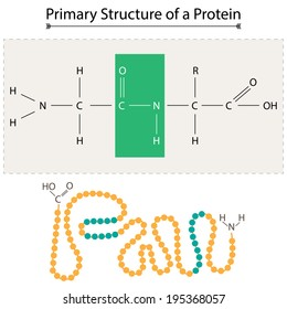Primary Structure of a Protein.