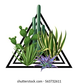 Print with cactuses and succulents set. Plants of desert.