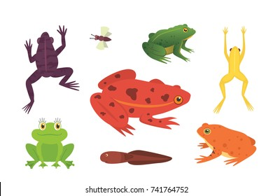 PrintExotic amphibian set. Frogs in different styles Cartoon Vector Illustration isolated. tropical animals