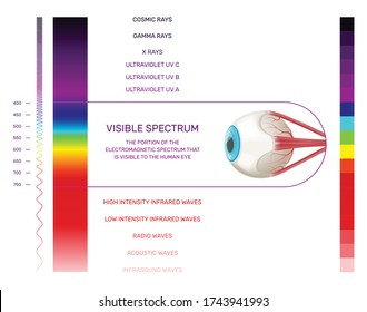 Prism light spectrum infographics with vertical color palette and human eye image with range and text vector illustration