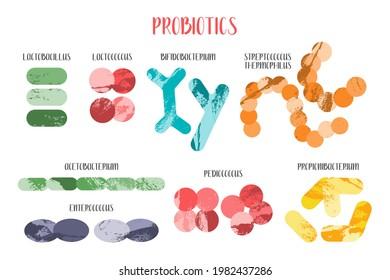 Probiotics. Lactic acid bacteria. Good microorganisms for gut and intestinal flora health. Microflora. Microbiome. Bifidobacterium, lactobacillus,  lactococcus, thermophilus streptococcus. Vector set