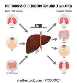 Process of detoxification and elimination cartoon medical poster