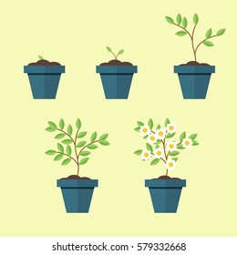 Process of growing a houseplant in a pot from seed to flowering trees. Vector, illustration isolated on yellow background EPS10.
