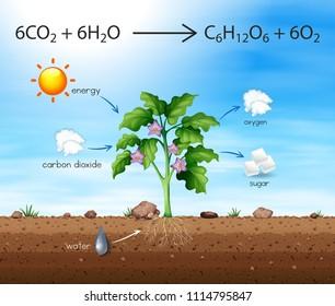 樹木產生氧氣插圖的過程