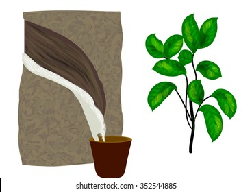 Rubber Tree Stock Illustrations, Images & Vectors ...