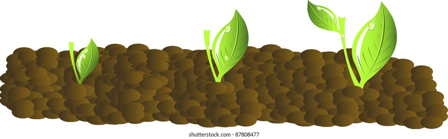 Progression of seedling growth vector