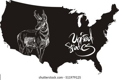 Pronghorn and U.S. outline map. Black and white vector illustration. Antilocapra americana.
