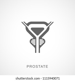 prostate gland images  stock photos  u0026 vectors