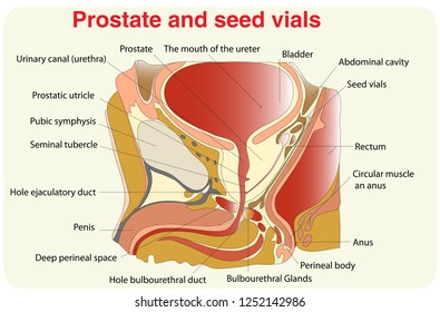 Prostate and sed vials