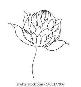 Protea flower line drawing. Vector illustration. Line continuous.