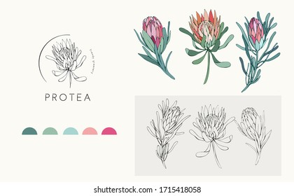 Protea logo and flowers. Hand drawn wedding herb, plant and monogram with elegant leaves for invitation save the date card design. Botanical rustic trendy greenery vector illustration