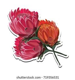 Protea Pink and Orange Flower bouquet Vector Illustration