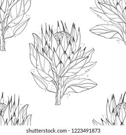 Protea, tropical flower, vector illustration. seamless pattern, contour