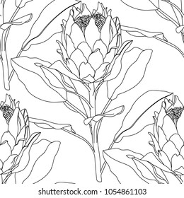 Proteus Flower.Seamless pattern with Protea flower.Protea Realistic Vector illustration.Protea. Hand drawn vector illustration.Tropical king protea flower .