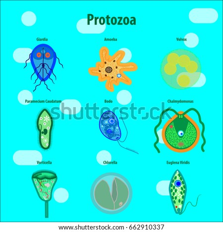 protozoa unicellular organisms stock vector royalty free 662910337