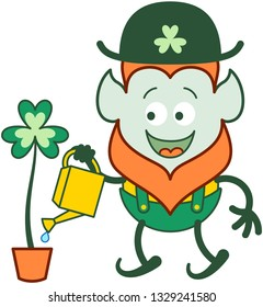 Proud Saint Patrick's Day Leprechaun with red beard, pointy ears and traditional hat, shorts and suspenders smiling enthusiastically while watering a beautiful big clover in a pot with a can