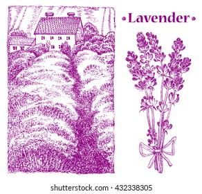 Provence landscape. lavender bouquet. Vector hand drawn graphic illustration.