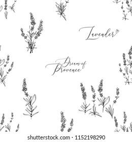 Provence lavender seamless pattern background. Fine botanical illustration on white background. Vintage style lavender outline sketches drawn black ink or pen.