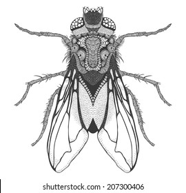 Fly Wing Images Stock Photos Vectors