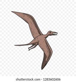 Pteranodon Dinosaur. Jurassic and Cretaceous animal. Prehistoric vector dino.