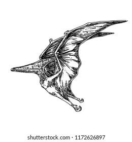 Pteranodon. Sketch. Engraving style. Vector illustration.