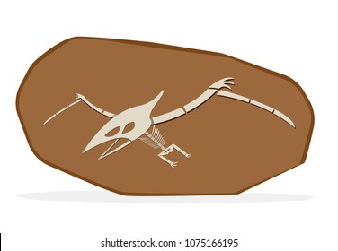 Pterosaurs bone in cray fossil, on white vector art