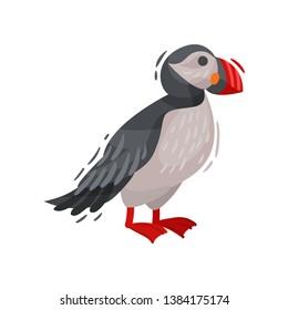 Puffin bird image. Cartoon Icelandic puffin. Vector illustration.