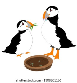 Puffin birds building nest vector isolated