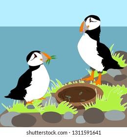 Puffins making nest vector illustration
