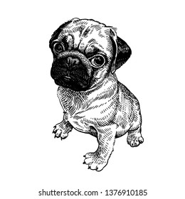 Puppy Realistic Images, Stock Photos & Vectors | Shutterstock