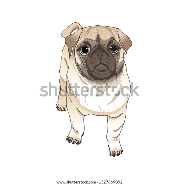 Pug Dog Hand Draw Cartoon Portrait Stock Vector Royalty Free