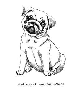 pug dog sketch