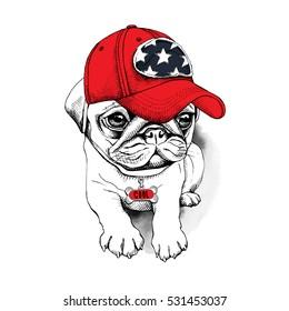 553c511e7e2de Pug puppy in a red cap with a charm bone. Vector illustration.