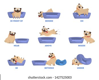 Pug set. Learning preposition concept. Animal above and behind, near and under the pillow. Isolated vector educational illustration in cartoon style